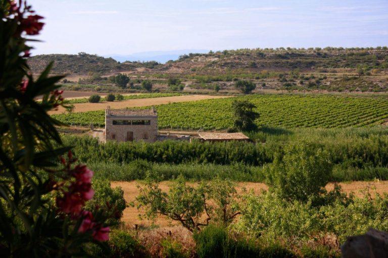 Imatge de la casa envoltada per les vinyes i camps de cereals. A la imatge també es poden veure flors i altres plantes