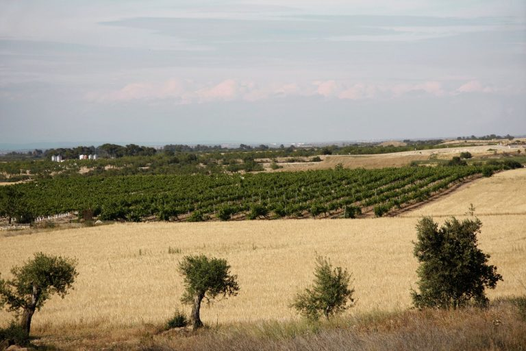 vista dels camps de cereals y vinyes