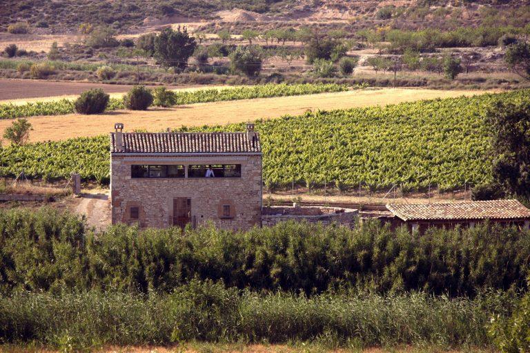 Vista de la casa desde lluny envoltada per les vinyes