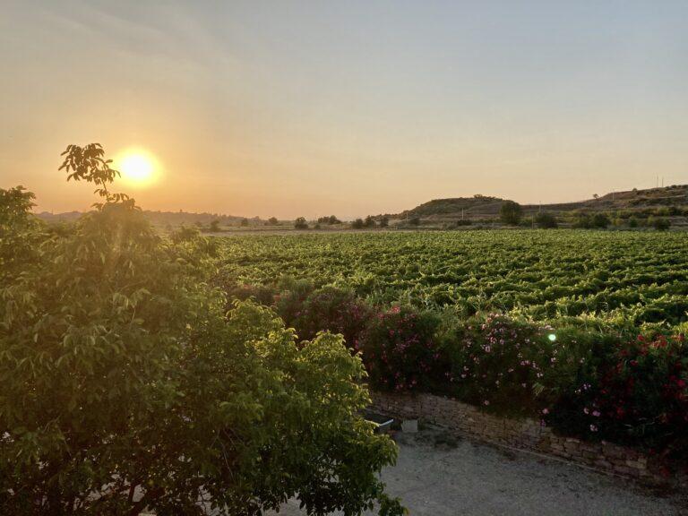 Imagen tomada desde la terraza, en la que se aprecia el atardecer sobre los viñedos